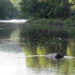 Vue de la rivière @AventureSentinelle